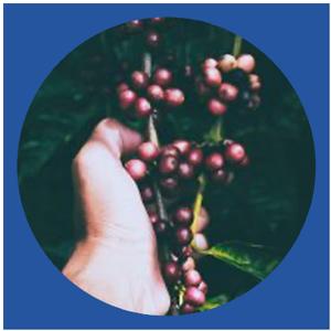 hand holding berries